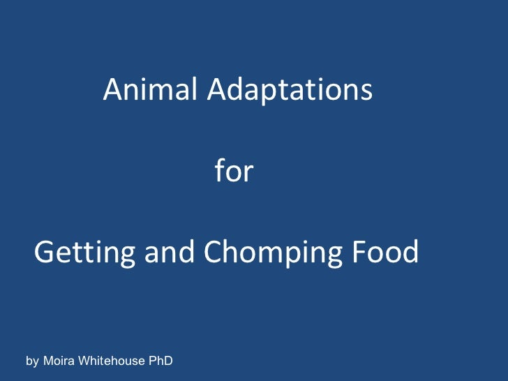 Animal Adaptations   for Getting and Chomping Food by Moira Whitehouse PhD