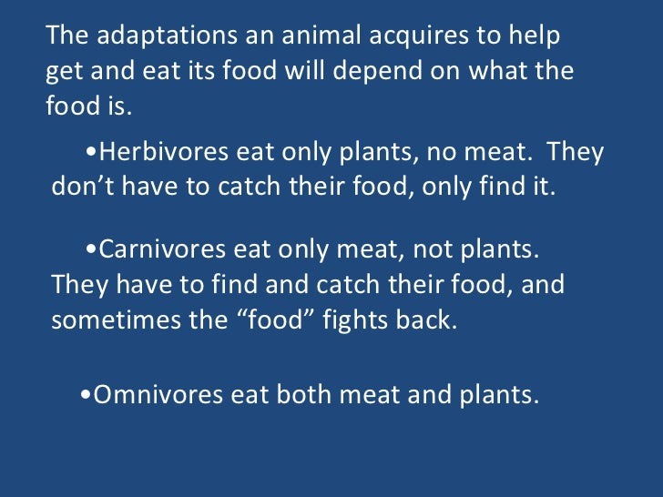 Adaptations for getting and chomping food (teach)