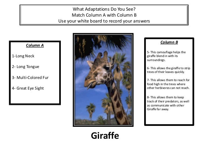 Adaptations Test Game