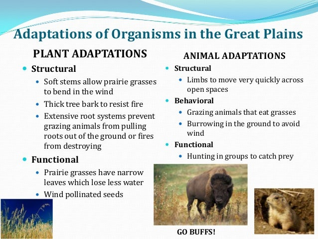 adaptive features of animals in grasslands #adaptive features of animals in grasslands #adaptive features of animals in grasslands #brown university supplement essays #purple hibiscus essay titles #globle warming essay #essay on population problem in india.