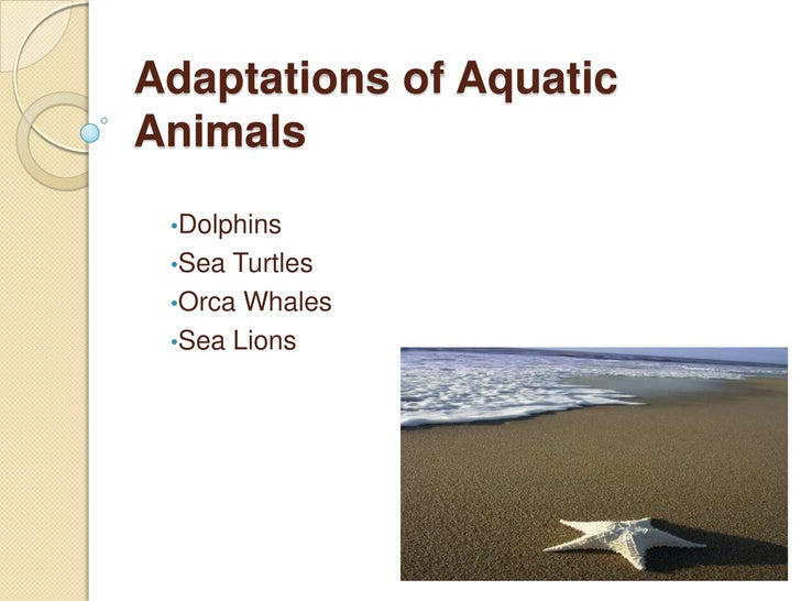 characteristics of aquatic plants and animals