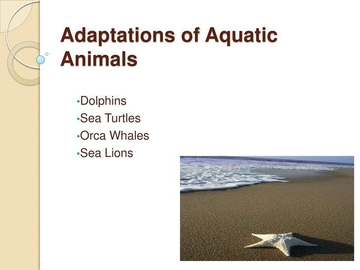 Adaptations of Aquatic Animals<br /><ul><li>Dolphins