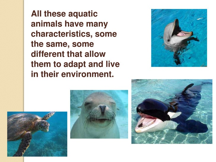 essay on aquatic animals for kids Short essay on the grassland ecosystem these are herbivores which feed on grasses like animals - cows, buffaloes, deers, sheep essays, letters, stories.