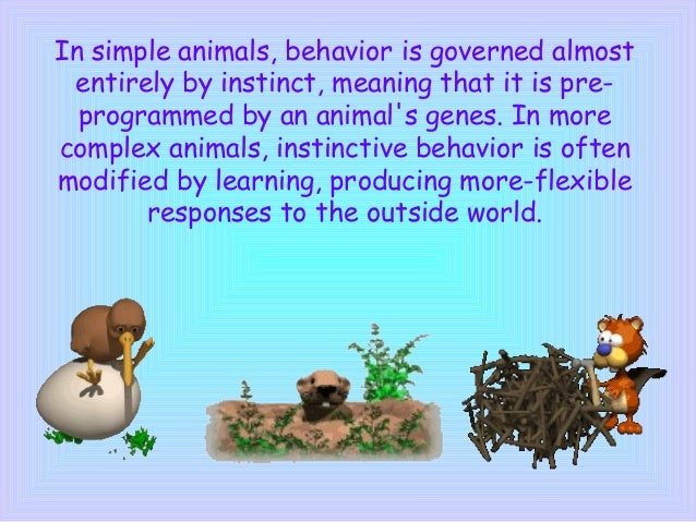 Structural and Behavioral Adaptations