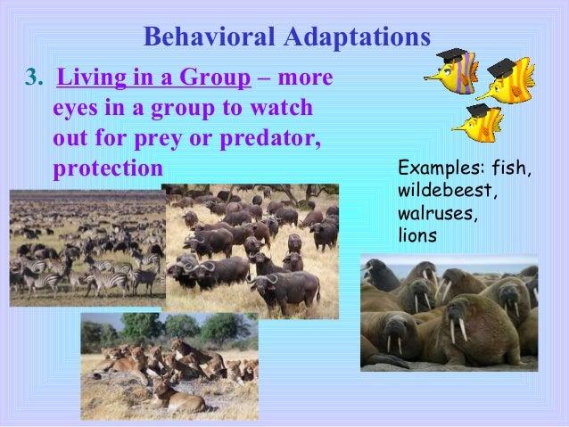 animal adaptation definition - photo #47
