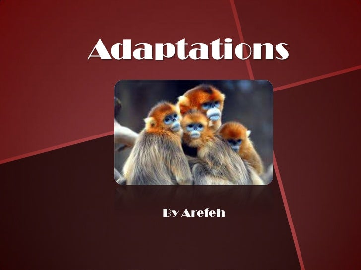 Adaptations    By Arefeh