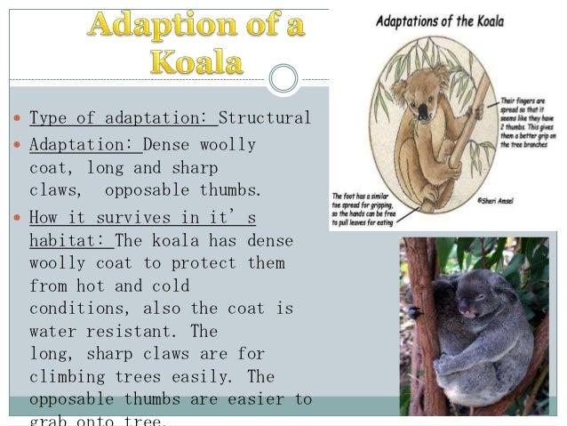 Adaption of animal and plant