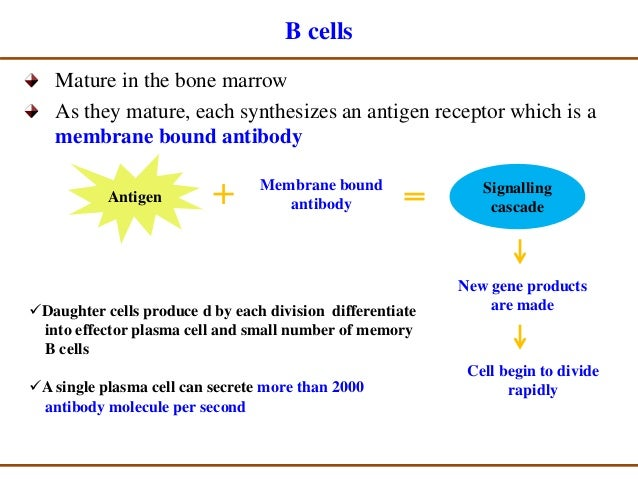immune response to viral infection pdf