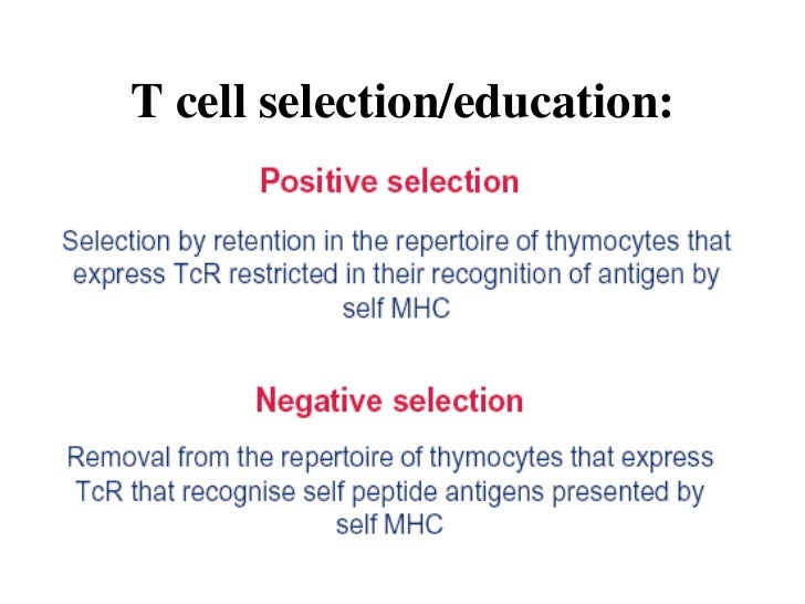 adaptive immunity t cell selection education