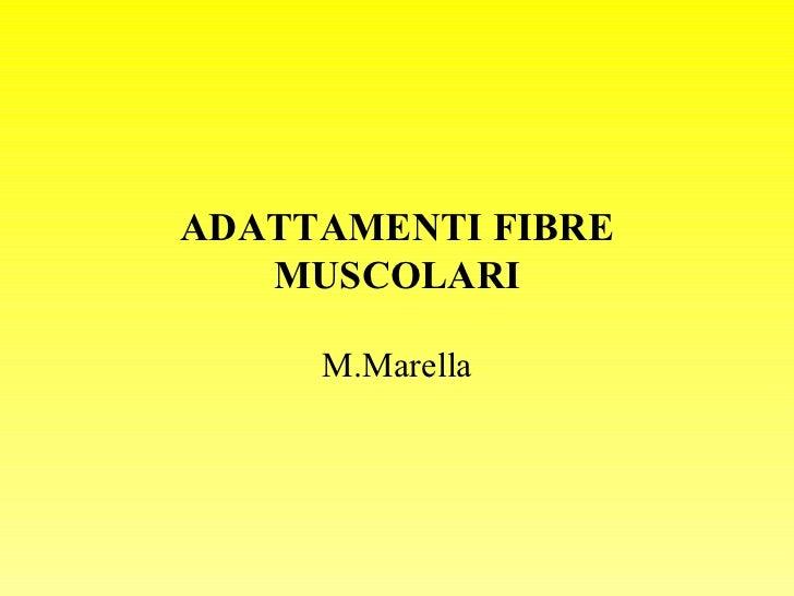 Adattamenti fibre muscolari