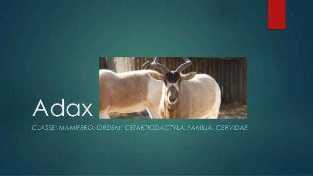 Adax CLASSE: MAMIFERO; ORDEM: CETARTIODACTYLA; FAMÍLIA: CERVIDAE