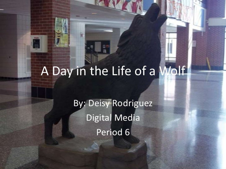 A Day in the Life of a Wolf      By: Deisy Rodriguez         Digital Media           Period 6