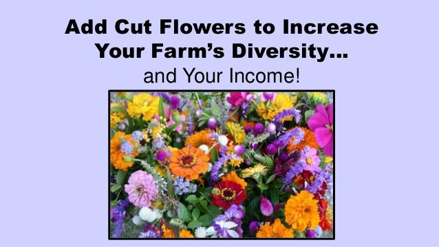 Add Cut Flowers to Increase Your Farm's Diversity… and Your Income!