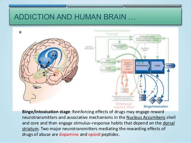 addiction and the human brain essay Understanding addiction how addiction hijacks the brain addiction involves craving for something intensely, loss of control over its use, and continuing involvement with it despite adverse consequences.