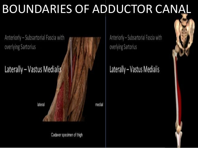 Adductor Canal Presented By Hanna