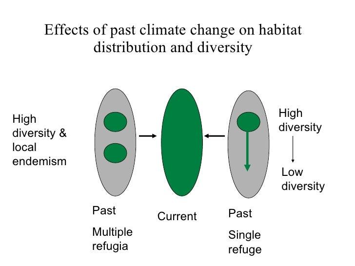 Impact of diversity essay