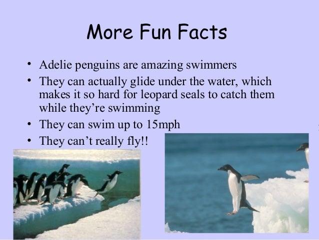 Adelie penguins erica