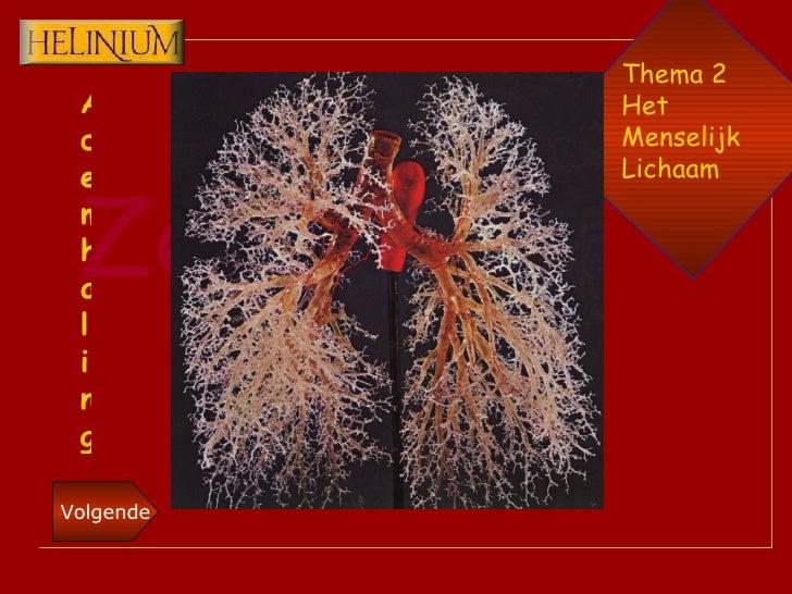 Thema 2 Het  Menselijk Lichaam Ademhaling