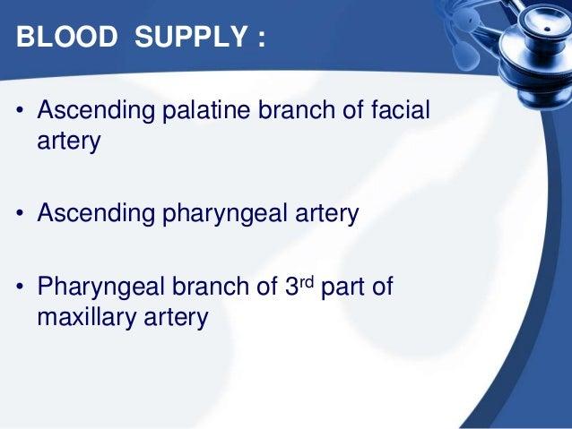 LYMPHATIC DRAINAGE : • Upper deep jugular nodes • Retropharyngeal nodes • Parapharyngeal nodes