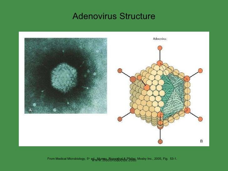 Adeno,Parvo,Polyoma Virus