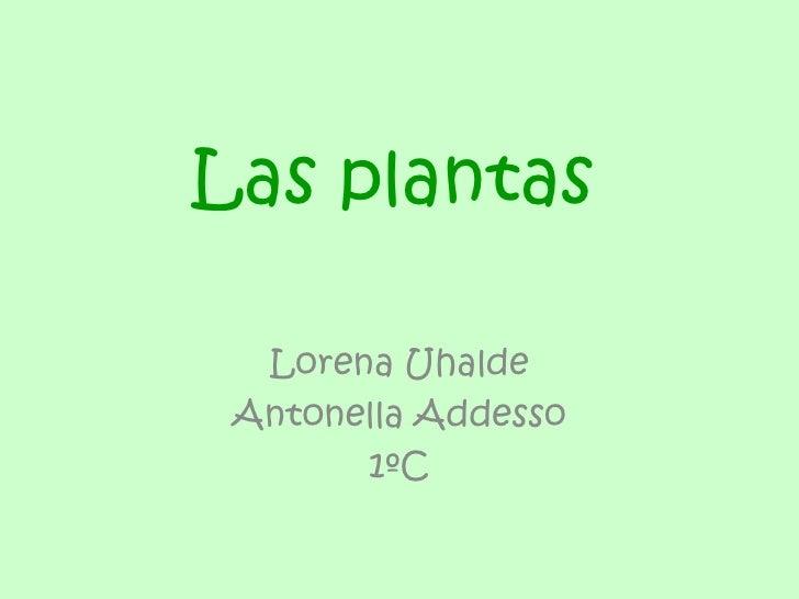 Las plantas  Lorena Uhalde Antonella Addesso       1ºC