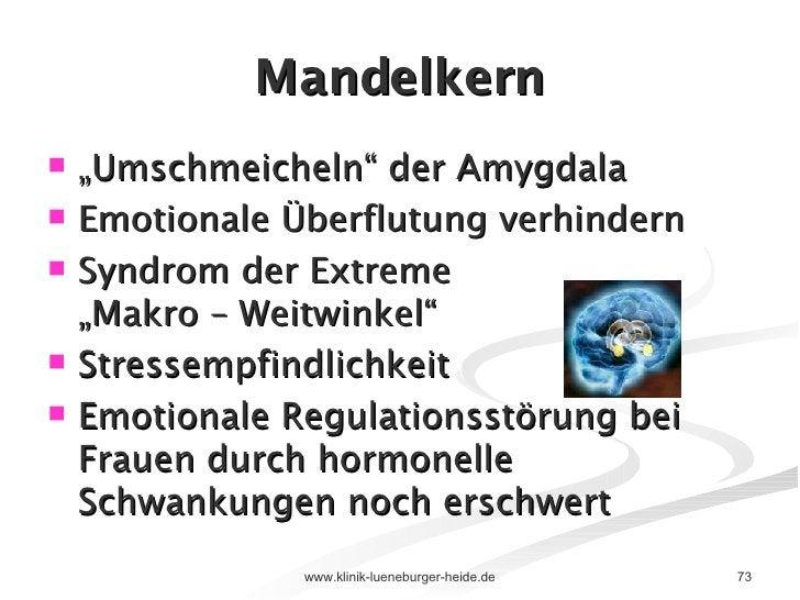 """Mandelkern <ul><li>"""" Umschmeicheln"""" der Amygdala </li></ul><ul><li>Emotionale Überflutung verhindern </li></ul><ul><li>Syn..."""