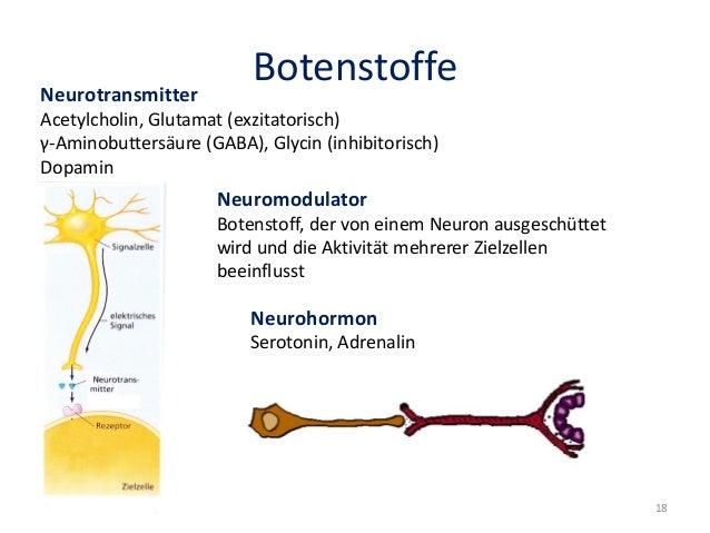 BotenstoffeNeurotransmitter Acetylcholin, Glutamat (exzitatorisch) γ-Aminobuttersäure (GABA), Glycin (inhibitorisch) Dopam...