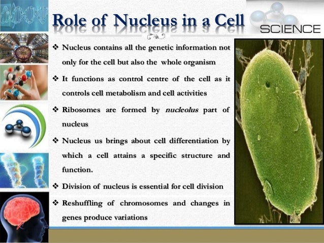 the fundamental unit of life Take test of the fundamental unit of life multiple choice questions for cbse class 9 biology on topperlearning.