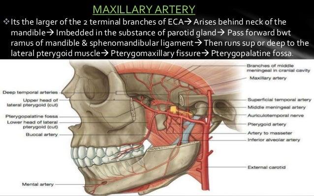Skull Base Anatomy By Dr Aditya Tiwari