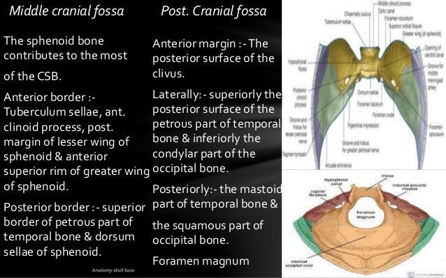 Skull base anatomy by Dr. Aditya Tiwari