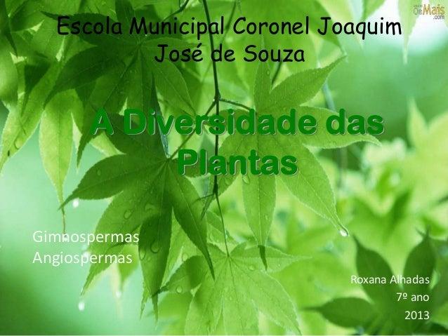 A Diversidade das Plantas Roxana Alhadas 7º ano 2013 Escola Municipal Coronel Joaquim José de Souza Gimnospermas Angiosper...