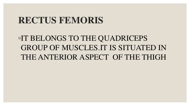 RECTUS FEMORIS ◦IT BELONGS TO THE QUADRICEPS GROUP OF MUSCLES.IT IS SITUATED IN THE ANTERIOR ASPECT OF THE THIGH
