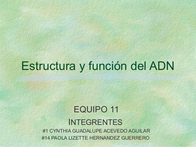 Estructura y función del ADNEQUIPO 11INTEGRENTES#1 CYNTHIA GUADALUPE ACEVEDO AGUILAR#14 PAOLA LIZETTE HERNANDEZ GUERRERO