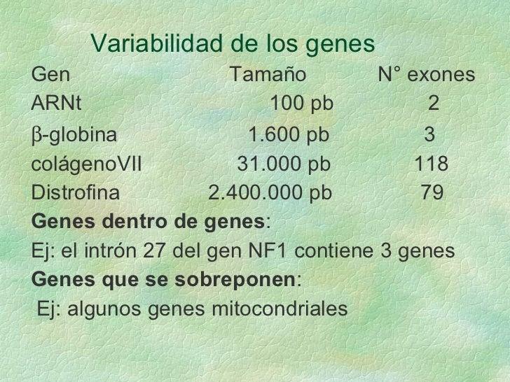 Variabilidad de los genes <ul><li>Gen  Tamaño  N° exones </li></ul><ul><li>ARNt  100 pb  2 </li></ul><ul><li> -globina  1...