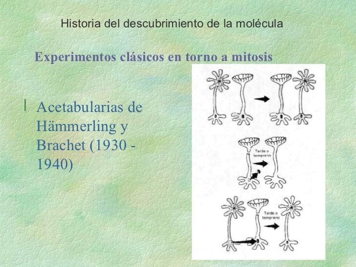 Estructura y Funcion del ADN Slide 2