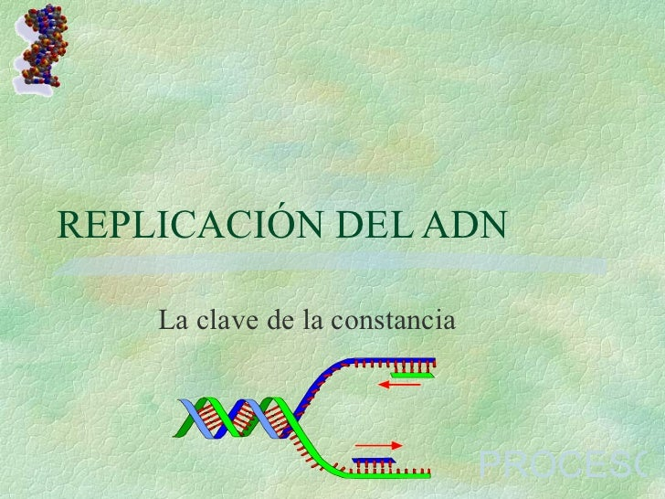 REPLICACIÓN DEL ADN La clave de la constancia PROCESO