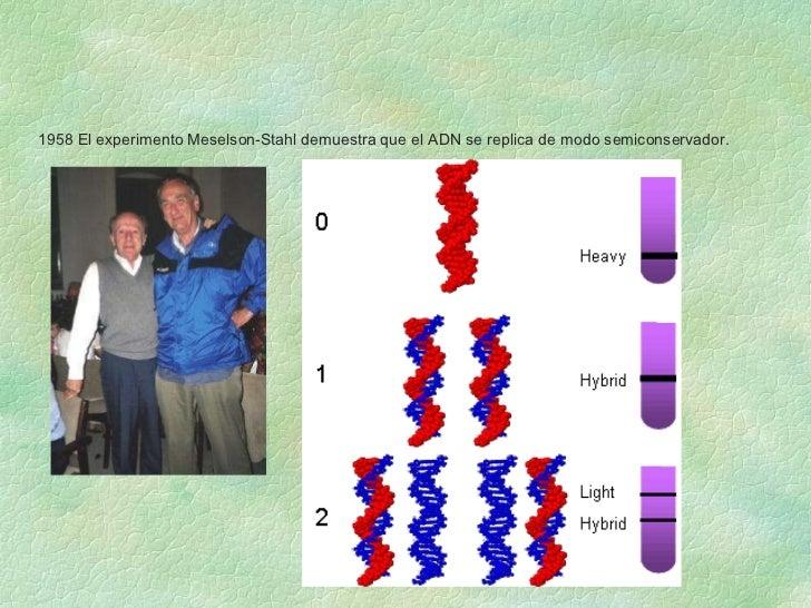 1958 El experimento Meselson-Stahl demuestra que el ADN se replica de modo semiconservador.