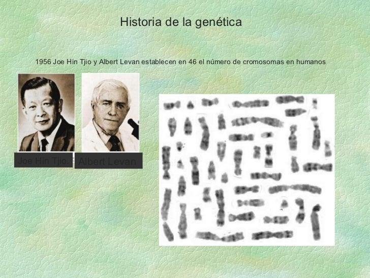 Historia de la genética 1956 Joe Hin Tjio y Albert Levan establecen en 46 el número de cromosomas en humanos  Joe Hin Tjio...