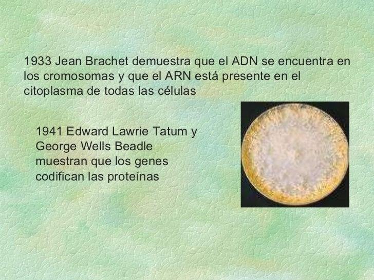 1933 Jean Brachet demuestra que el ADN se encuentra en los cromosomas y que el ARN está presente en el citoplasma de todas...