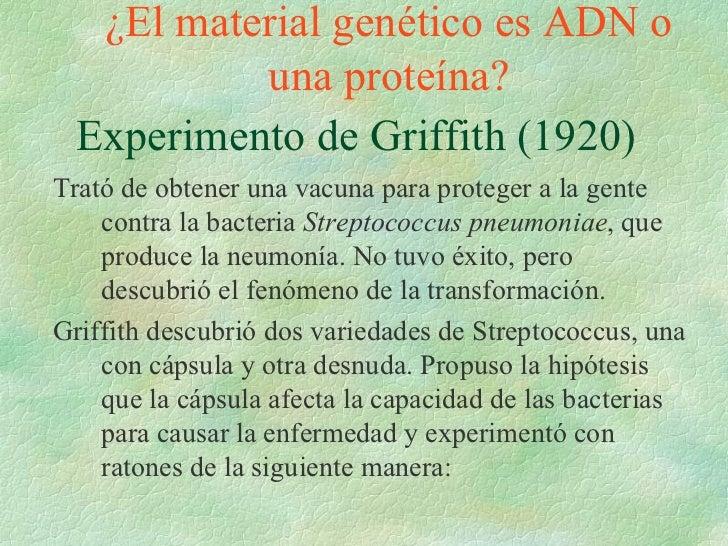 Experimento de Griffith (1920) ¿El material genético es ADN o una proteína? Trató de obtener una vacuna para proteger a la...