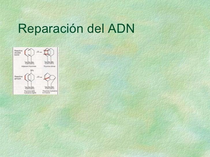 Reparación del ADN