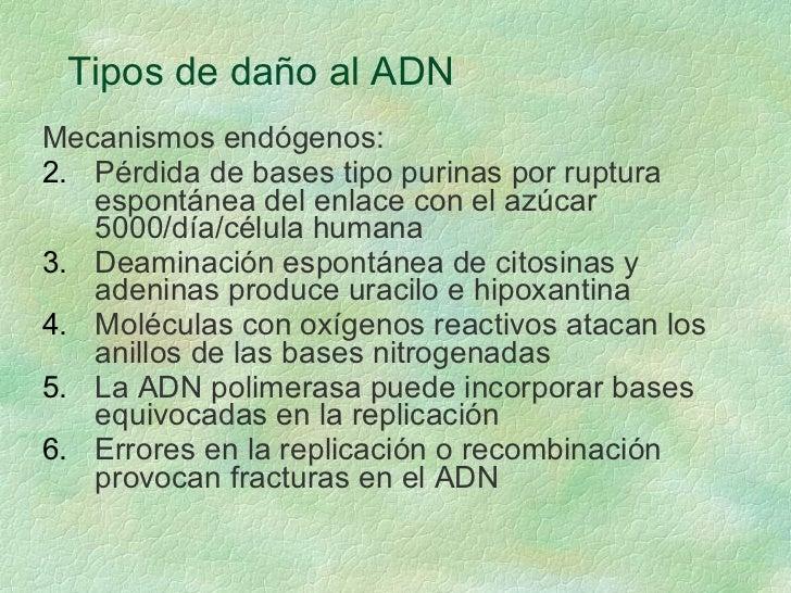 Tipos de daño al ADN <ul><li>Mecanismos endógenos: </li></ul><ul><li>Pérdida de bases tipo purinas por ruptura espontánea ...