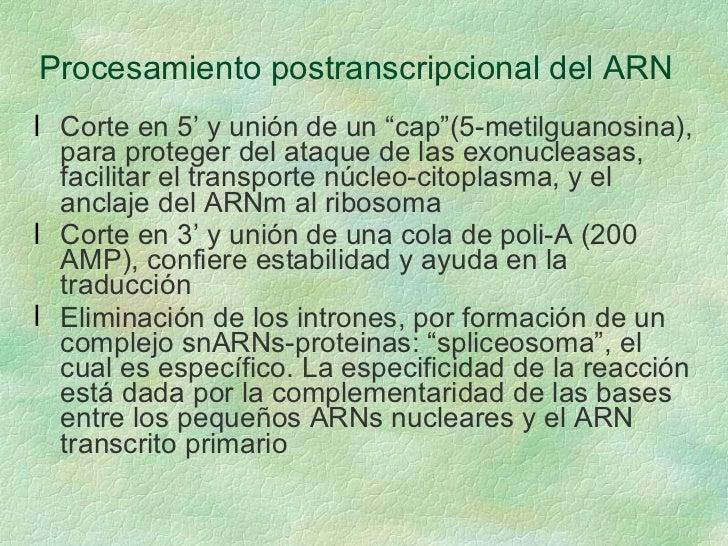 """Procesamiento postranscripcional del ARN <ul><li>Corte en 5' y unión de un """"cap""""(5-metilguanosina), para proteger del ataq..."""