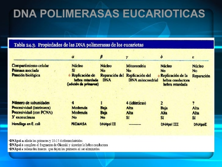 DNA POLIMERASAS EUCARIOTICAS