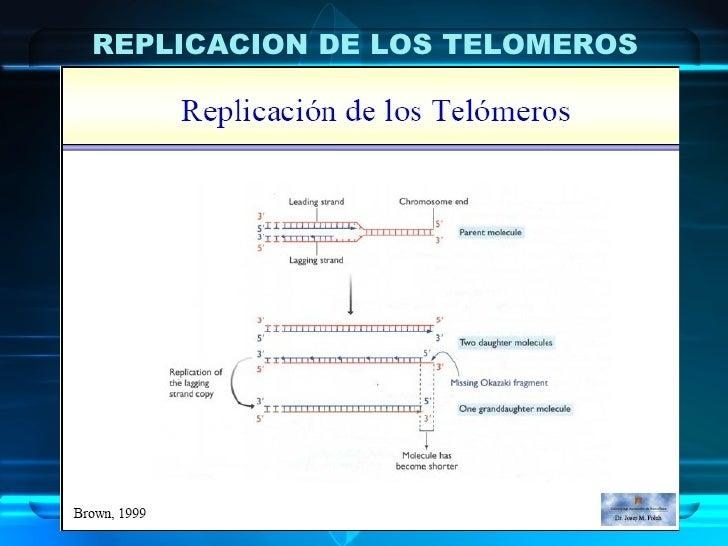 REPLICACION DE LOS TELOMEROS