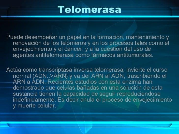 Telomerasa <ul><li>Puede desempeñar un papel en la formación, mantenimiento y renovación de los telómeros y en los proceso...