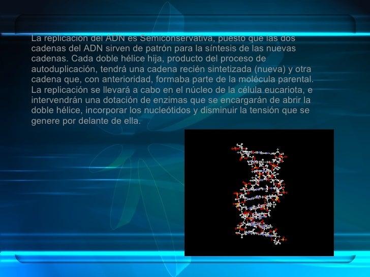 La replicación del ADN es Semiconservativa, puesto que las dos cadenas del ADN sirven de patrón para la síntesis de las nu...