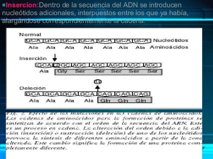 <ul><li>Insercion: Dentro de la secuencia del ADN se introducen nucleótidos adicionales, interpuestos entre los que ya hab...