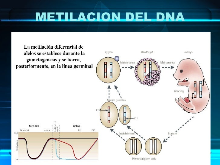 METILACION DEL DNA