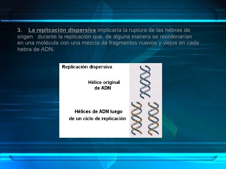 3.  La replicación dispersiva   implicaría la ruptura de las hebras de origen  durante la replicación que, de alguna maner...